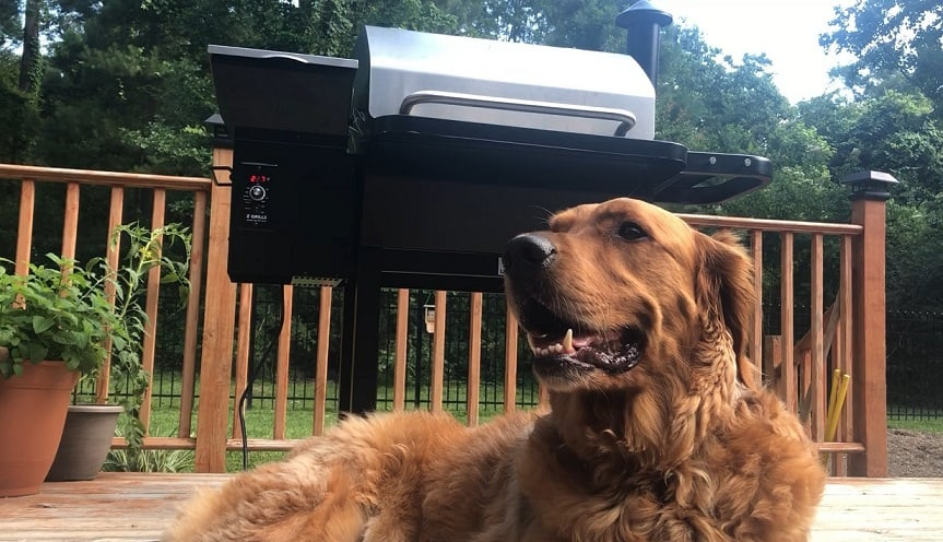 Rex in Front of Grill